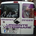 colantare auto urgente veterinare