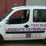 colantare auto urgente veterinare 2