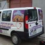 colantare auto urgente veterinare 3