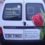 colantare auto magnolia.ro